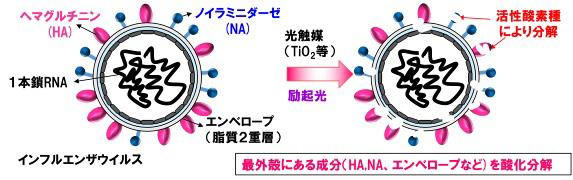光触媒による抗ウイルス効果のメカニズム